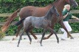 Cornet foals!