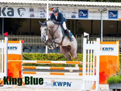 King Blue goedgekeurd bij KWPN