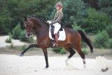 VDM What a Dancer is Grand Prix dressuur!